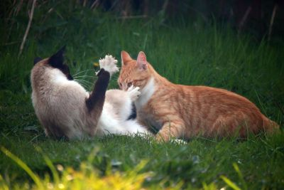 cat, grass, animal, cute, nature, kitten, green grass, playful