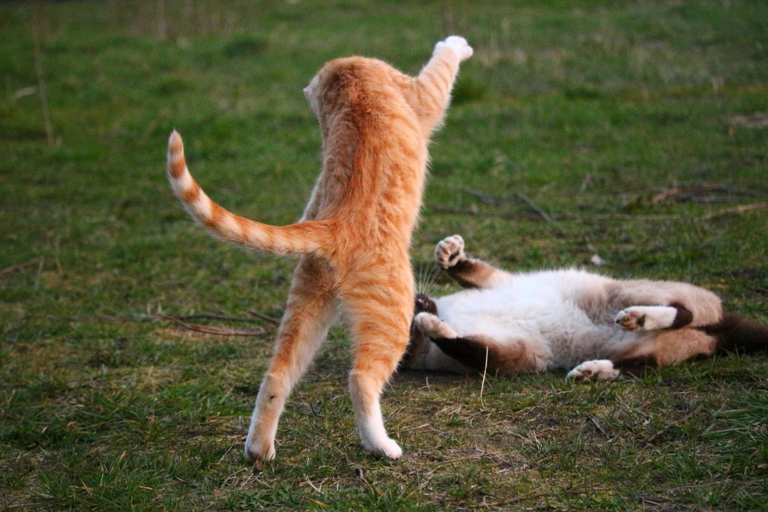 Image libre herbe animal mignon animal chaton saut - Animal mignon ...