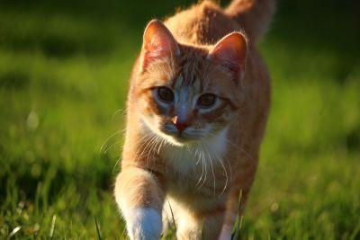 cute, grass, animal, nature, grass, spring, kitten, cat, feline, kitty, pet