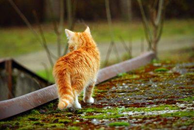 venku, kočkovitá šelma, kotě, kočka, kitty, roztomilý, pet srst, vousy