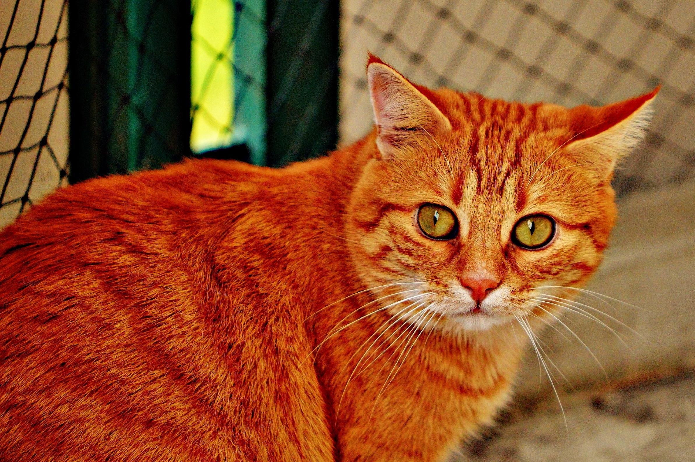 Смешные картинки с рыжими кошками, открытка для