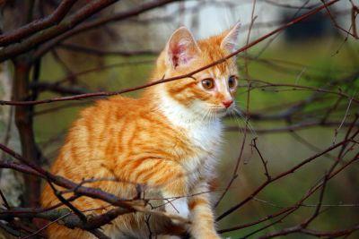 životinja, mačka, priroda, slatka, mače, mačji, stablo, grana, mladi, ljubimac, krzno