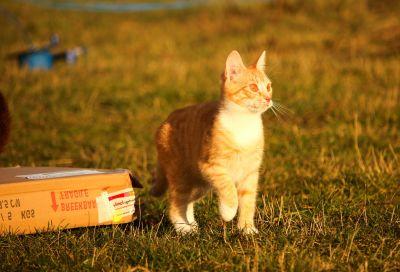 grass, cat, animal, cute, field, portrait, nature, kitten, pet