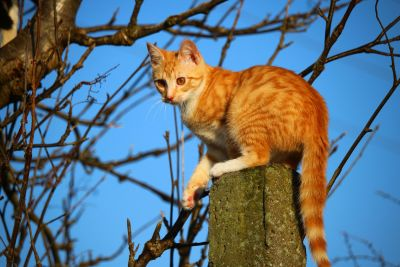 cat, portrait, animal, cute, nature, feline, kitten, pet, outdoor