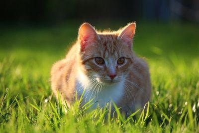 grass, nature, cute, animal, grass, landscape, meadow