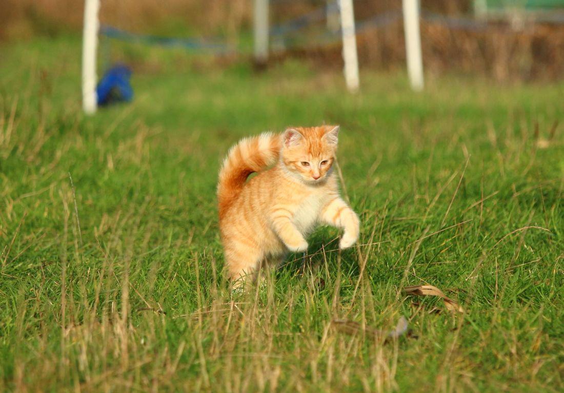 cat, grass, animal, cute, feline, fur, kitten, pet, grass, summer, kitty