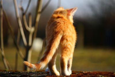 cat, animal, cute, nature, fur, outdoor, wildlife, portrait, wood, eye, wild