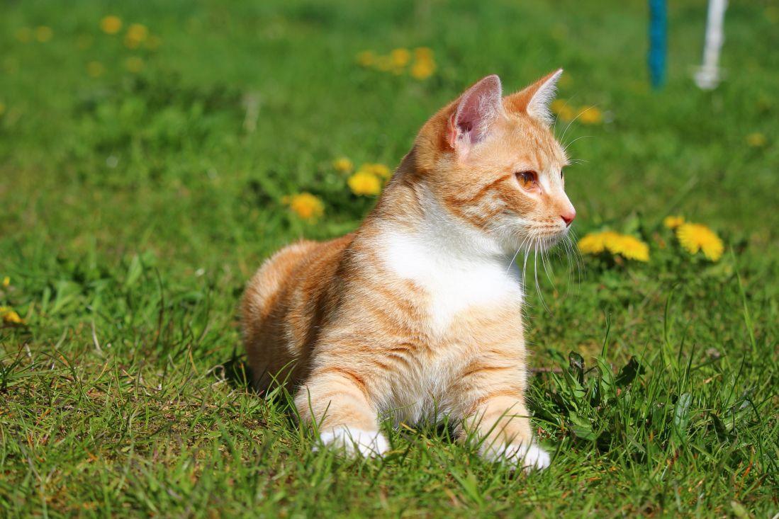 Image libre mignon herbe animal chat jeune portrait - Animal mignon ...
