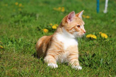 cute, grass, animal, cat, young, portrait, eye, kitten, adorable, sit, pet