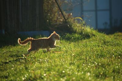grass, animal, nature, wildlife, grass, domestic cat, summer, outdoor
