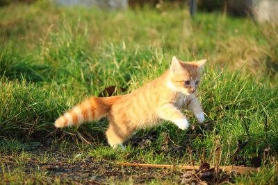 animal, cute, grass, cat, fur, grass, nature, feline, kitty
