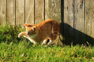 roztomilý, tráva, kočka, mladá, dvorek, tráva, venkovní