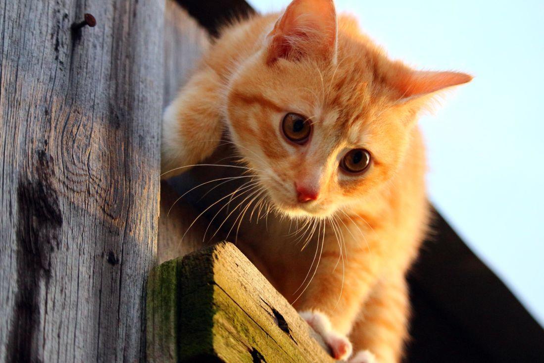 cat, cute, animal, young, kitten, feline, kitty, pet, playful
