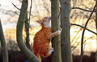 nature, outdoor, tree, wood, domestic cat,