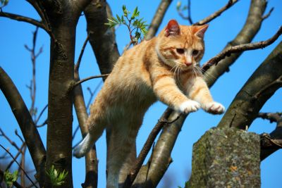 nature, tree, jump, animal, cat, outdoor, feline, kitten
