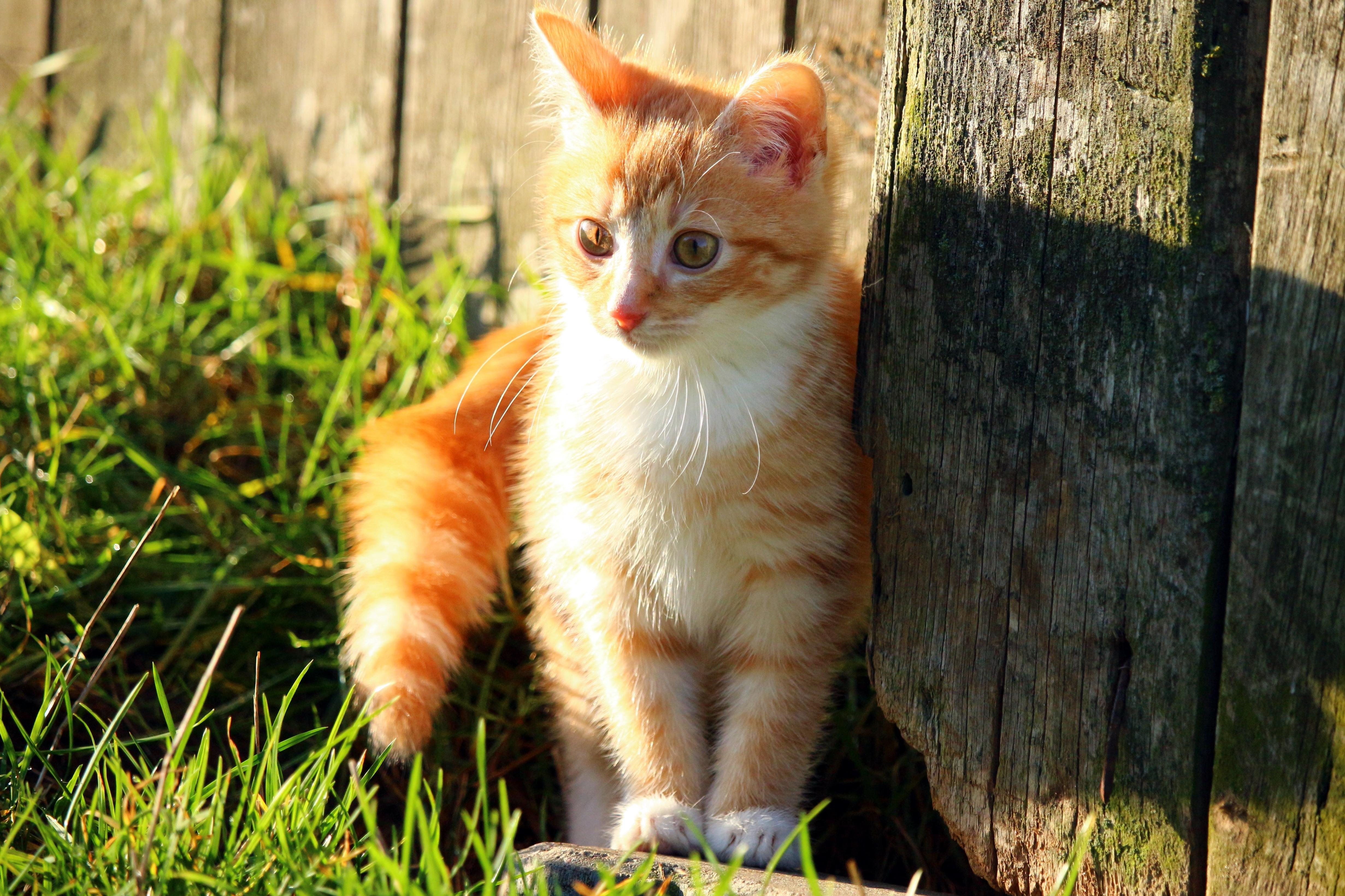 Free picture cute cat animal nature sunshine shadow kitten