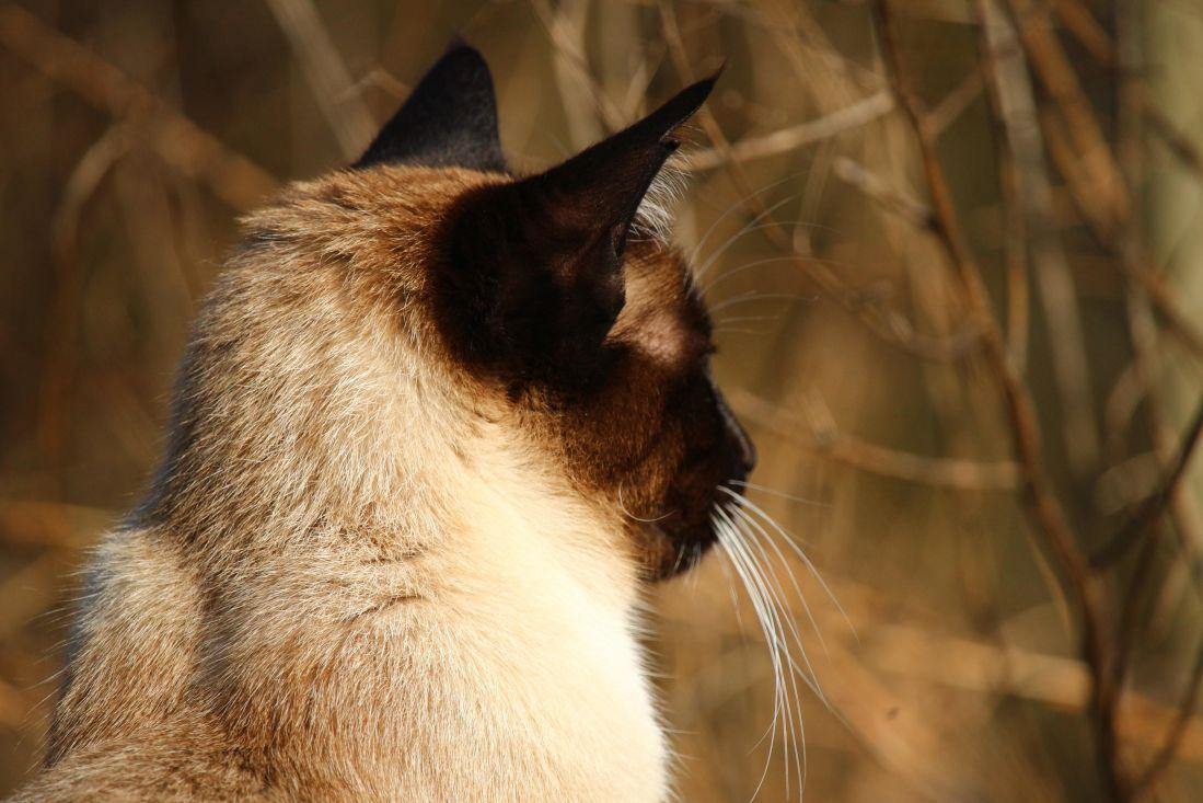 Free Picture Cat Portrait Animal Feline Fur Pet