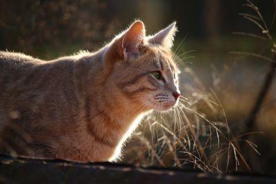 cat, animal, head, curious, portrait, feline, kitten, pet, kitty, fur