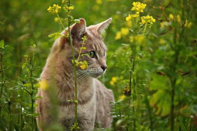 nature, cat, animal, feline, fur, pet, whiskers, grass, summer, meadow, kitty