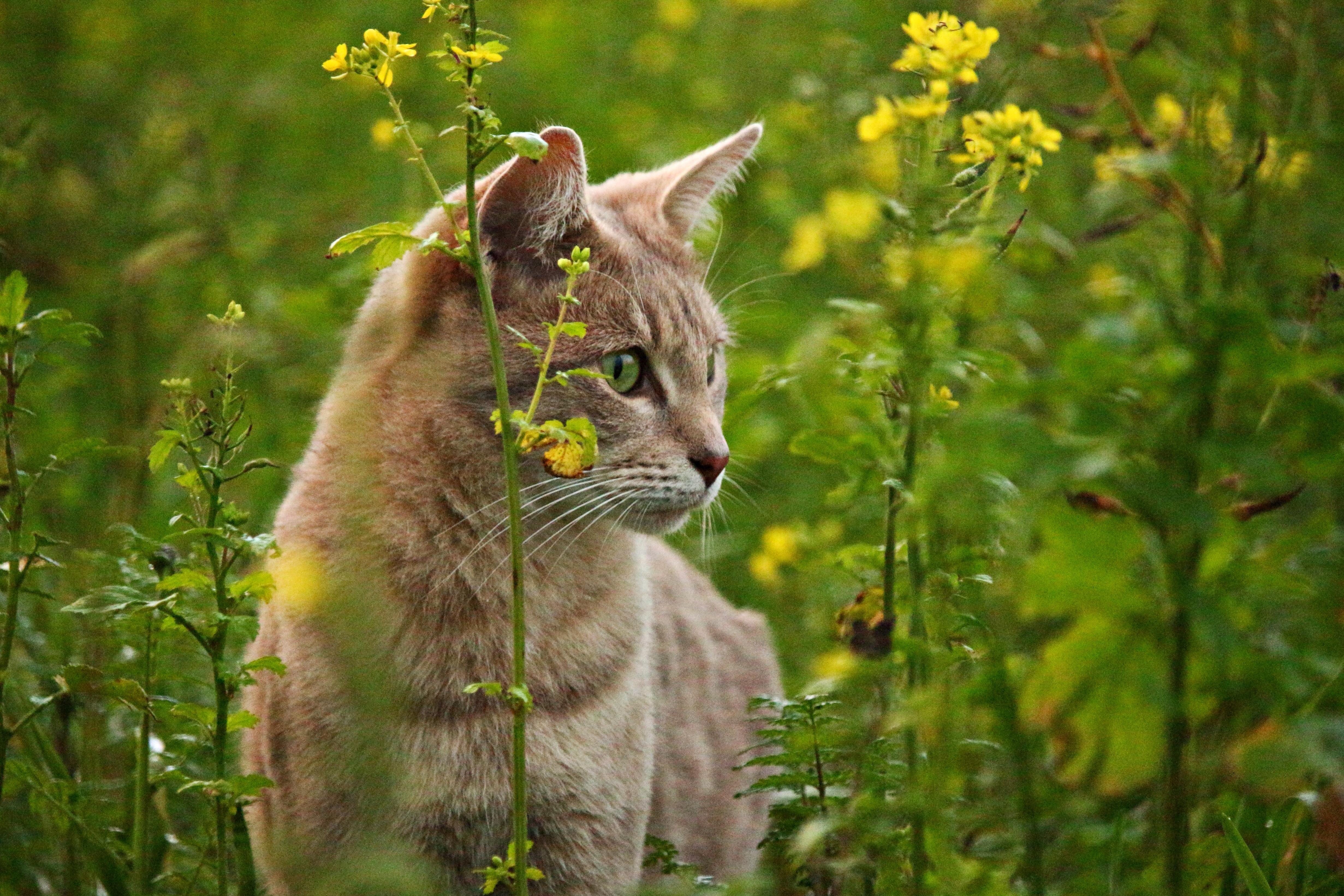 фотографом фото домашних котов на природе можно сказать унитазе