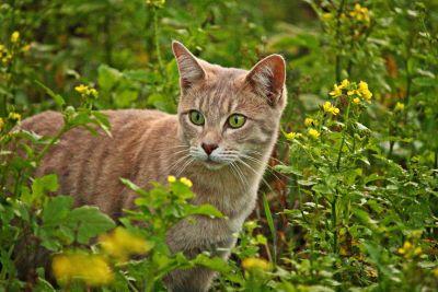 natureza, flores, grama, Prado, bonito, grama, felino, gato, gatinho, gatinho, animais de estimação