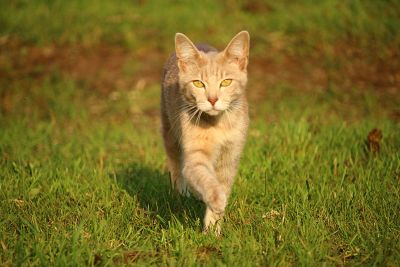 yellow cat, grass, animal, feline, kitten, spring, grass, kitty, fur, pet