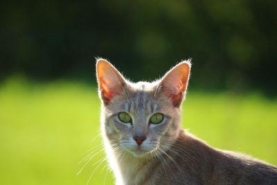 niedlich, gelbe Katze, Natur, Tier, Auge