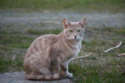 yellow, outdoor, cat, nature, animal, cute, feline, kitten, kitty, pet