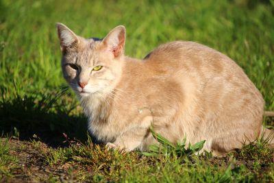 jaune cat, outdooe, herbe, été, animal, mignon, herbe, animal, fourrure, chaton, kitty
