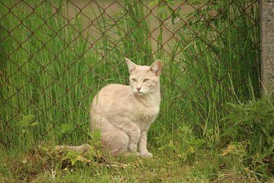 cat, nature, animal, green grass, fence, summer