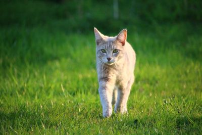 green grass, cat, animal, cute, feline, kitten, pet, kitty