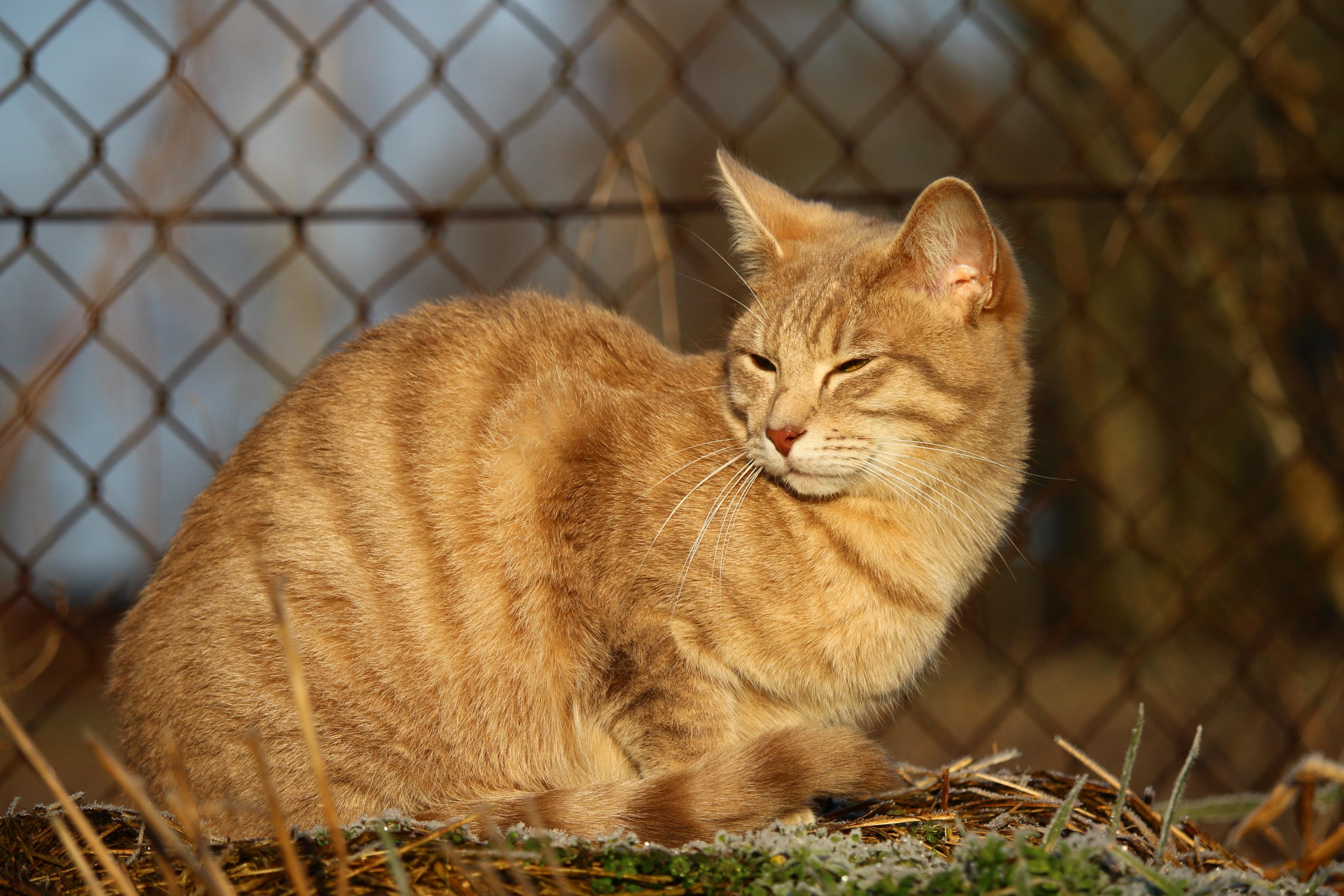 экспозицию картинки желтого котика слухам, может помочь