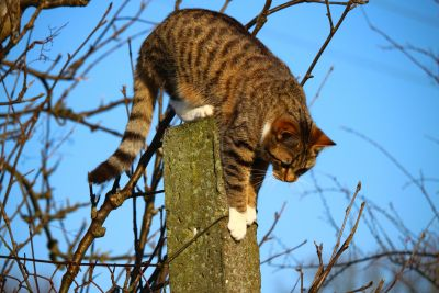 tree, nature, domestic cat, fence, jump, animal, portrait