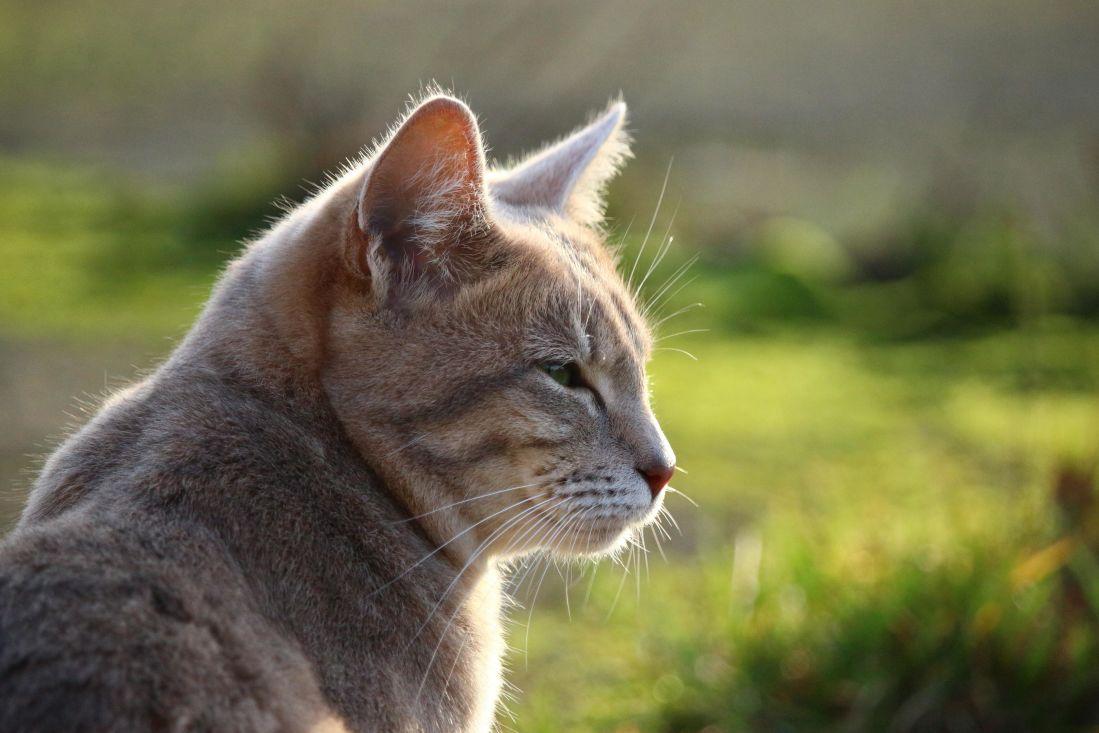 image libre jaune chat animal nature mignon fourrure f line petit chat pour animaux de. Black Bedroom Furniture Sets. Home Design Ideas