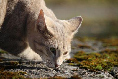 životinje, priroda, biljni i životinjski svijet, krzno, sladak, lukav, mačka, mače