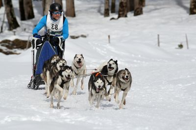 snow, winter, sled, cold, ice, dogsled, traveler, vehicle