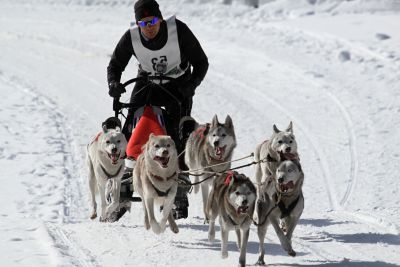 snow, winter, sled, cold, ice, dog, race, dogsled, vehicle