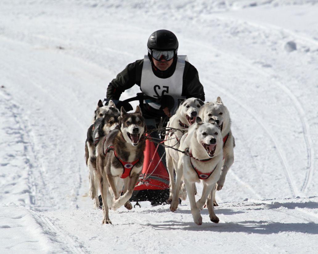 Schnee, Winter, Schlitten, Wettbewerb, Rennen, Kälte, Eis, schnell