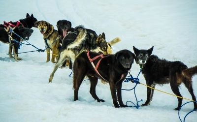 sled, snow, dogsled, vehicle, conveyance, sport, winter, cold