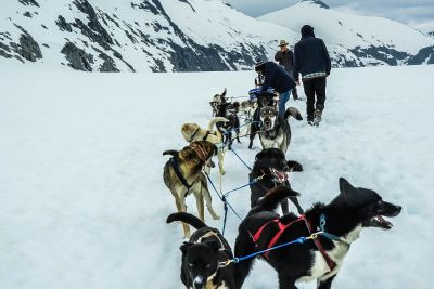 snow, winter, sled, cold, ice, dogsled, vehicle, conveyance