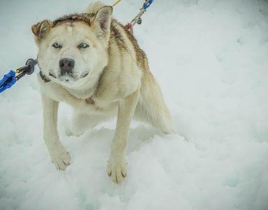 dog, canine, winter, snow, portrait, pet, cute, white dog