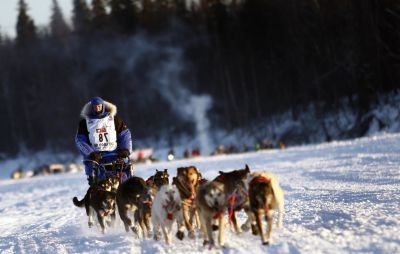snow, winter, competition, cold, race, ice, sled, dogsled