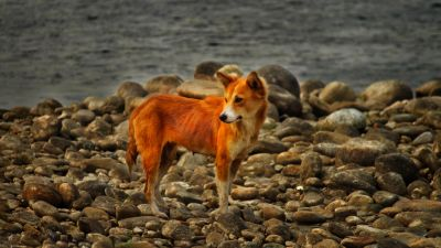nature, canine, lake, coast, nature, pet, landscape