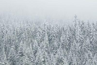 Schneeflocke, Winter, Frost, Schnee, gefroren, kalt, Natur, Holz, Eis, Schneesturm, wind