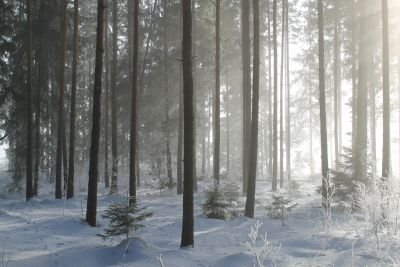 snow, winter, fog, wood, tree, mist, frost, cold, nature