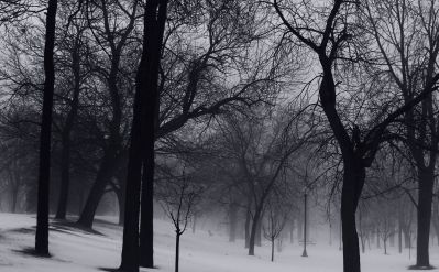 tree, mist, fog, landscape, winter, dawn, wood, snow