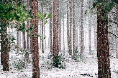 bois, conifère, flocon de neige, tempête de neige, paysage, arbre, givre, neige, hiver, congelée, nature