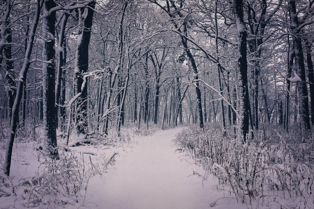 winter, snow, wood, tree, cold, frost, landscape, frozen, road, snowflake