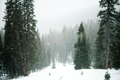 snow, winter, wood, tree, evergreen, conifer, pine, landscape, snowstorm