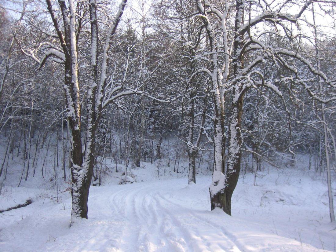 겨울, 눈, 추위, 서 리, 나무, 냉동, 얼음, 나무, 풍경, 숲